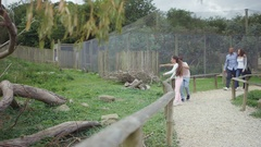 4K Happy family looking into animal enclosure at wildlife park Stock Footage