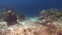 Unhealthy coral in caribbean  Stock Footage