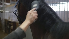 Young man combing a fetlock a mane stallion. Care for animals Stock Footage