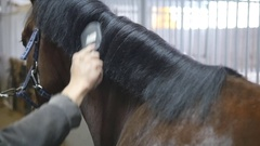 Male hand combing a black or brown horse mane in a stall. Slow mo Stock Footage