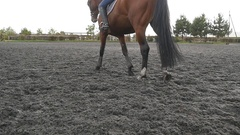 Foot of horse walking on the sand. Close up of legs. Slow motion Stock Footage