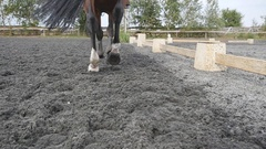 Foot of horse walking on the sand. Slow motion Rear back view Stock Footage