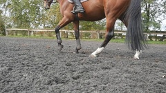 Close up of legs going on the wet muddy ground at manege at farm Stock Footage