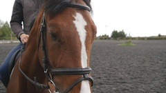 Horses muzzle or head with bridle close up. Slow motion Stock Footage