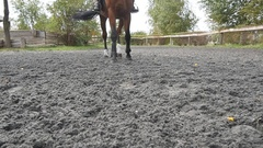 Foot of horse walking on the sand. Following for stallion. Slow motion Stock Footage