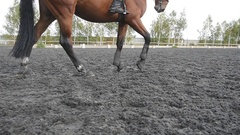 Foot of horse walking on the sand. Close up Slow motion Stock Footage