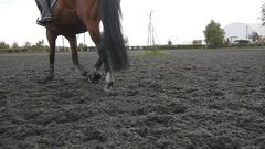 Foot of horse walking on the sand. Close up Slow motion Rear back view Stock Footage