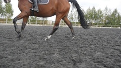 Following to foot of horse running. Close up of legs of stallion galloping. Slow Stock Footage