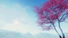 Petals falling from flowering sakura tree 4K Stock Footage
