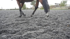 Foot of horse walking on the sand. Following for stallion. Close up Slow motion Stock Footage