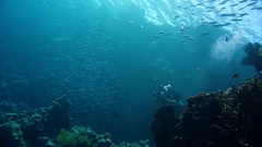 Group of scuba divers ascending on water surface in Egypt Stock Footage