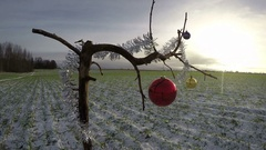 Tree branch on winter field with Christmas bauble, time lapse 4K Stock Footage