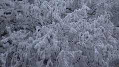 Very cold day in the forest in Hungary Stock Footage