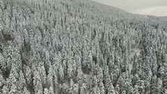 Flying Over Snowy Pine Forest 4K UHD Clip Captured With Drone Cam Stock Footage