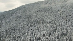 Snowy Pine Forest and Mountain 4K Aerial Clip Captured Witk Drone Cam Stock Footage