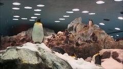 Penguins Tenerife Stock Footage