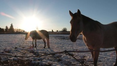 Winter Ranch Horses In Pasture Stock Footage
