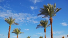 Palm Trees Against a Blue Sky. Summer Background Stock Footage