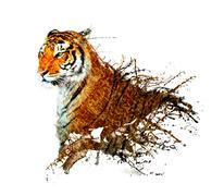 Tiger splash with butterfly Stock Illustration