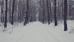 Walking in the Pine Wood on Snowy Path in Winter Stock Footage