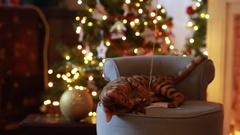 Bengal cat christmas decoration Stock Footage