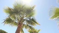 Palm tree on sky backdrop. Stock Footage