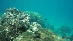 Underwater soft and stony corals Pacific ocean Stock Footage