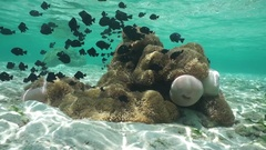 Sea anemones underwater sea lagoon school of fish Stock Footage
