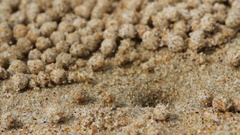 Little crab rolls balls from sand on a sea beach Stock Footage