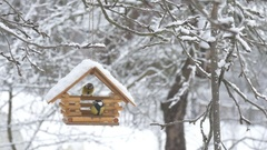 Birds fly up to the feeder and take the grain and fly away, snow on trees Stock Footage
