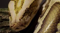 Beautiful Snake Close up 4k Stock Footage