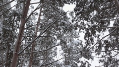 Winter frozen forest and trees Stock Footage