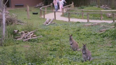 4K Happy family looking into wallaby enclosure at wildlife park Stock Footage