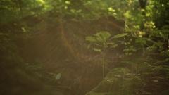 Forest Floor Lens Flare - Handheld Stock Footage
