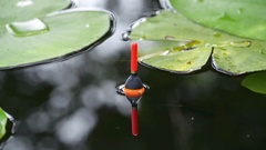Fishing float in the pond Stock Footage