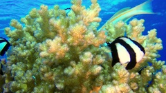 Underwater Colorful Tropical Coral Reef Stock Footage