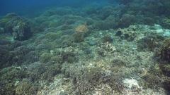 Sea turtle under water Stock Footage