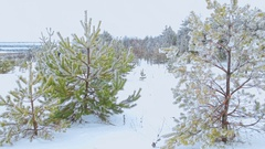 Cross-country skiing in nature Stock Footage