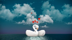 Couple of swans, swans swimming in the park Stock Footage