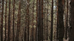 Woods forest. trees background. green nature landscape. wilderness. intro Stock Footage