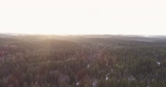 Backwards flight over winter fir forest in sunset Stock Footage