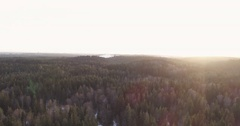 Forward flight with pan over winter fir forest in sunset Stock Footage
