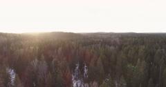 Sideways flight over winter fir forest in sunset Stock Footage