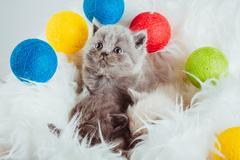 Kitten babys cat animal Stock Photos