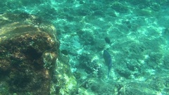 Tropical parrot fish Stock Footage