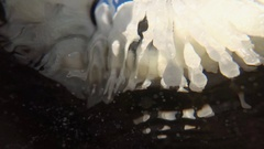 Icicles on the coastal rocks in the Black sea, the view from the water Stock Footage
