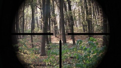 Targeting Scope Perspective of Deciduous, Temperate Forest Stock Footage