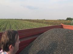 Sunflower Harvest ,Farmer in a trailer,slow  Stock Footage
