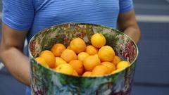 Tennis racket play mandarins and collect fruits in a basket Stock Footage