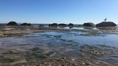 Low Tide Rocky Beach Splashing Waves In Background Stock Footage